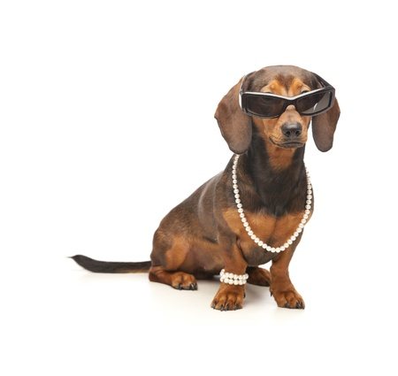 dachshund with sunglasses Foto de archivo