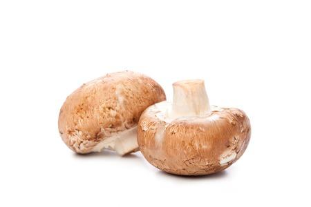 mushroom on white