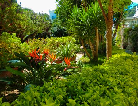 capri: Bautiful public garden in Capri island, Italy