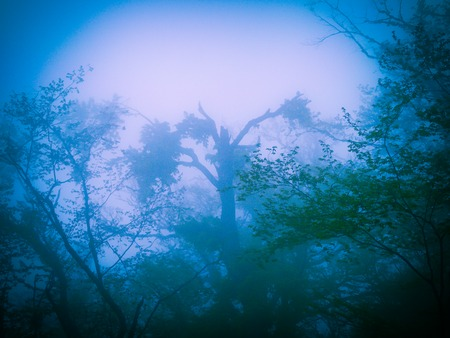 Mysterious blue forest in fog in halloween stile Stock Photo