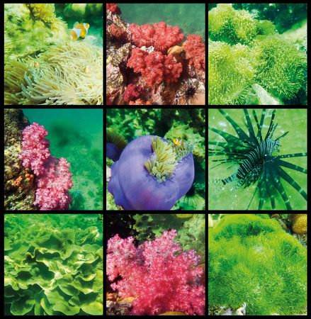 The collage of corals and fish in the Andaman Sea in Thailand Stock Photo