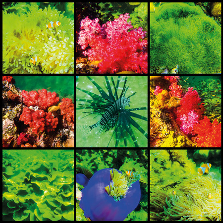 live coral: The collage of corals and fish in the Andaman Sea in Thailand Stock Photo