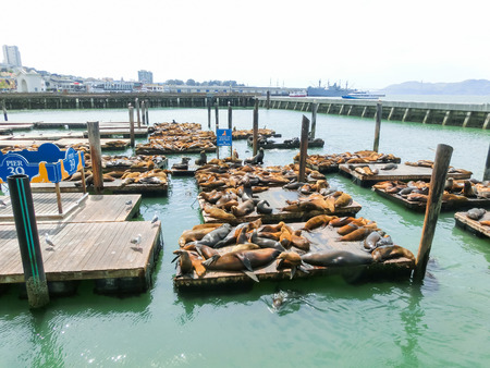 overcrowded: Sea lions at Pier 39 in San Francisco, USA