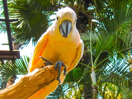 white perch: The white parrot sitting on the white perch