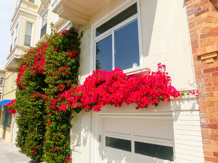 californian: The tipical buildings at San Francisco, USA