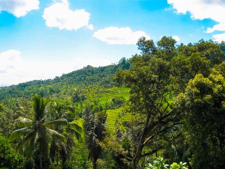 ubud: Green rice terraces at Bali island, Indonesia