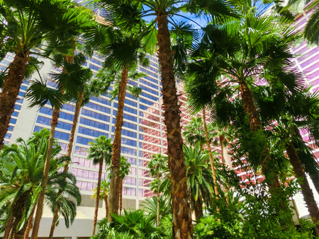 enticing: Las Vegas, United States of America - May 05, 2016: The palms at Flamingo Hotel and Casinoon the Strip in Las Vegas, Nevada on May 05, 2016: . Opened in 1946, the hotel has 3,626 rooms and the casino 77,000 square feet of gaming space.