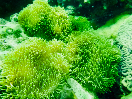 The green coral reef with sea in tropical, underwater.