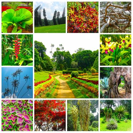 kandy: Royal Botanical garden Peradeniya. Sri Lanka