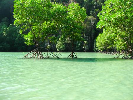Tropical landscape. Railay beach, Krabi, Thailand