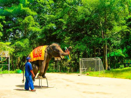 Koh Samui, Thailand - June 21, 2008: young elephant doing tricks Editorial