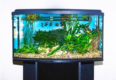 水槽の魚のクローズ アップ