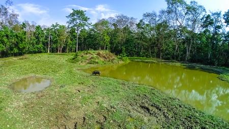 The wild boar in Chitwan National Park, Nepal Stock Photo