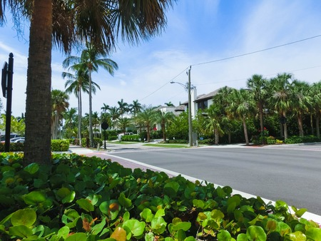 The road and palm trees at Naples, Florida Stock Photo