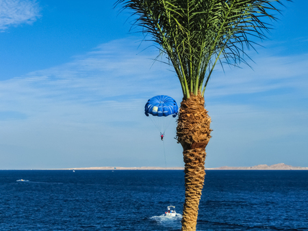 Parasailing on the sea in Egypt at Sharm el-Sheikh at sunny day Stockfoto - 118001185