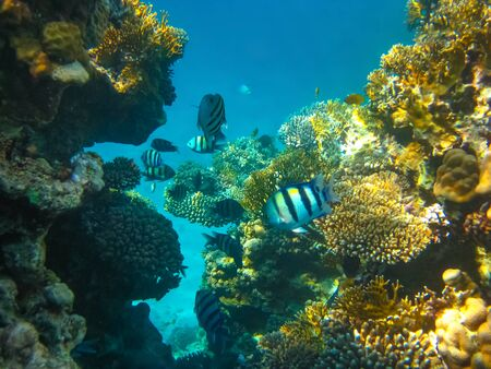 Underwater world. Coral fishes of Red sea. Egypt Stockfoto
