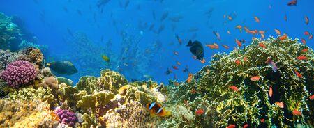 Underwater world. Coral fishes of Red sea. Archivio Fotografico