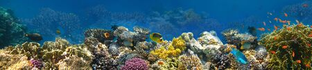 Underwater world. Coral fishes of Red sea. Egypt 写真素材