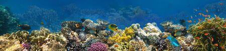 Unterwasserwelt. Korallenfische des Roten Meeres. Ägypten