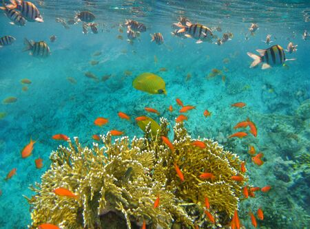Underwater world. Coral fishes of Red sea. Egypt Reklamní fotografie
