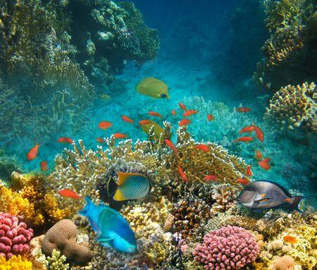 Mundo submarino. Peces de coral del mar rojo. Egipto