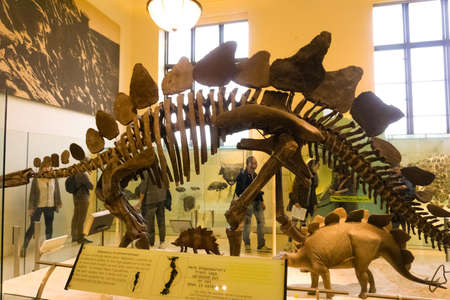 New York CITY, United States of America - May 01, 2016: Dinossaur Fossile model at the American museum of Natural History at New York CITY, United States of America on May 01, 2016: Editorial