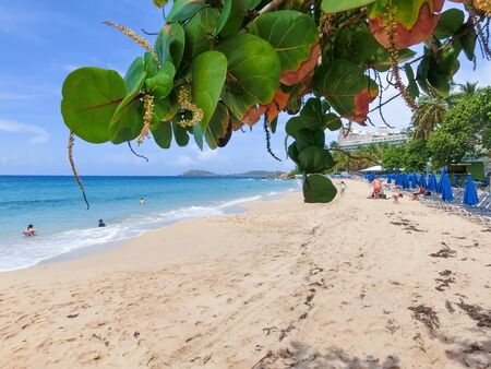 The Caribbean tropical beach. View through the branches of a blossoming tree