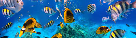 Underwater colorful tropical fishes at coral reef at Red Sea. Blue water in Sinai, Egypt. Couple snorkeling under water