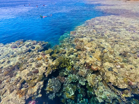 The people snorkeling in blue waters above coral reef on red sea in Sharm El Sheikh, Egypt.
