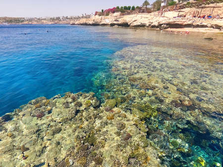 The people snorkeling in blue waters above coral reef on red sea in Sharm El Sheikh, Egypt. People and lifestyle concept Stok Fotoğraf
