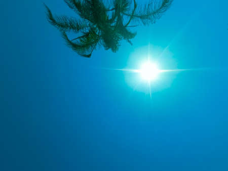 Green palm tree on blue sky background with sun