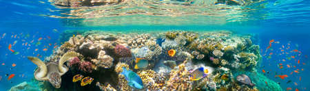 Underwater world. Coral fishes of Red sea. Egypt Stok Fotoğraf