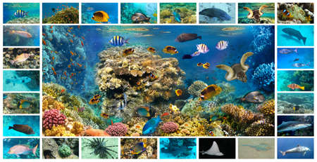 The collage of underwater images. Collection of tropical fishes. Catalog from coral fish - Picasso Trigger Fish, grouper, clownfish and other