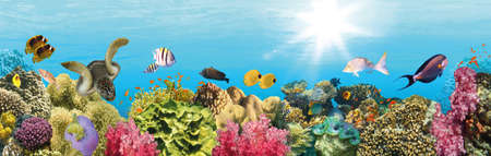 underwater paradise background - coral reef wildlife nature collage with sea turtle and colorful fish background. Vector Illustration