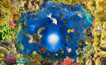 underwater paradise background - coral reef wildlife nature collage with sea turtle and colorful fish background