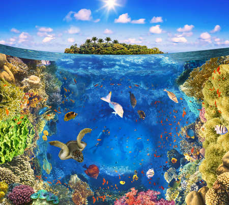 Group of scuba divers exploring coral reef. Underwater sports and tropical vacation. Beautiful sunny tropical beach on the island paradise and underwater world with coral fishes. Stockfoto