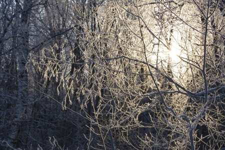 Hoarfrost on branches photo