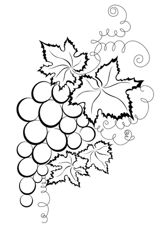grapes in isolated: Grapes