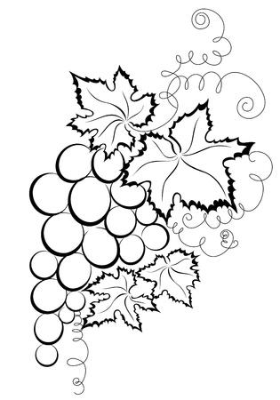 grape crop: Grapes