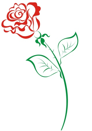 single red rose: Stylized red roses isolated on white background Illustration
