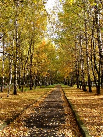 horizon over land: Autumn park Stock Photo