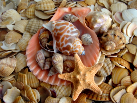 Sea shells background Stock Photo - 16594515