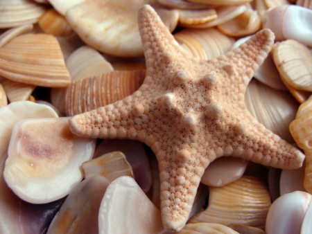 splinters: Starfish lies on splinters of seashells