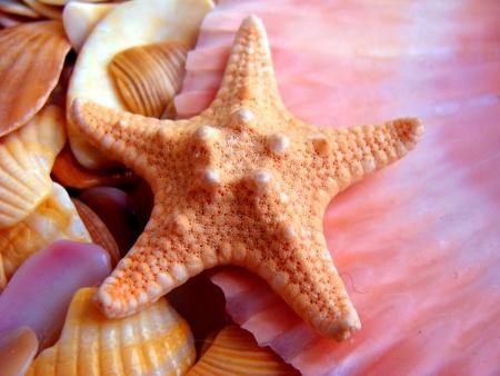 conch: Starfish background