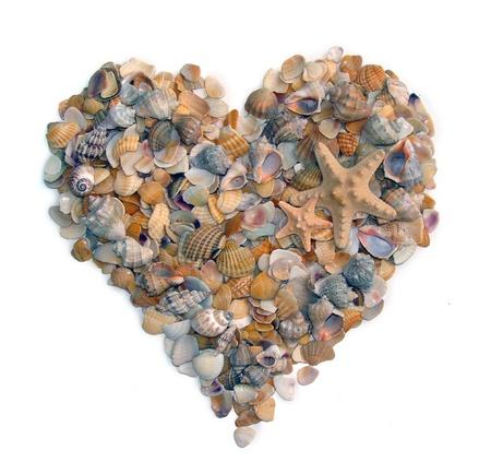 Heart shaped design made of seashells photo