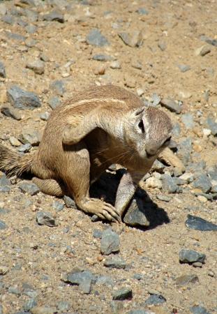 mountain peek: Funny Marmot