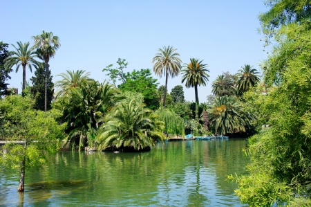 Tropical garden, lake and palm trees photo