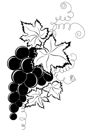 Branch grapes Vector