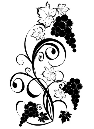 Grapevine. Wine design elements. Vector