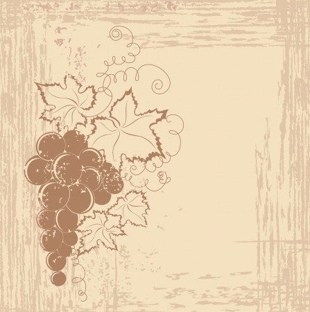 wine vineyards: Grapes branch on vintage background  Illustration